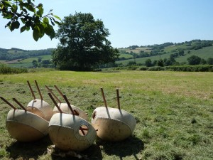 Kora bodies drying in the sun in Wales (rare event!)